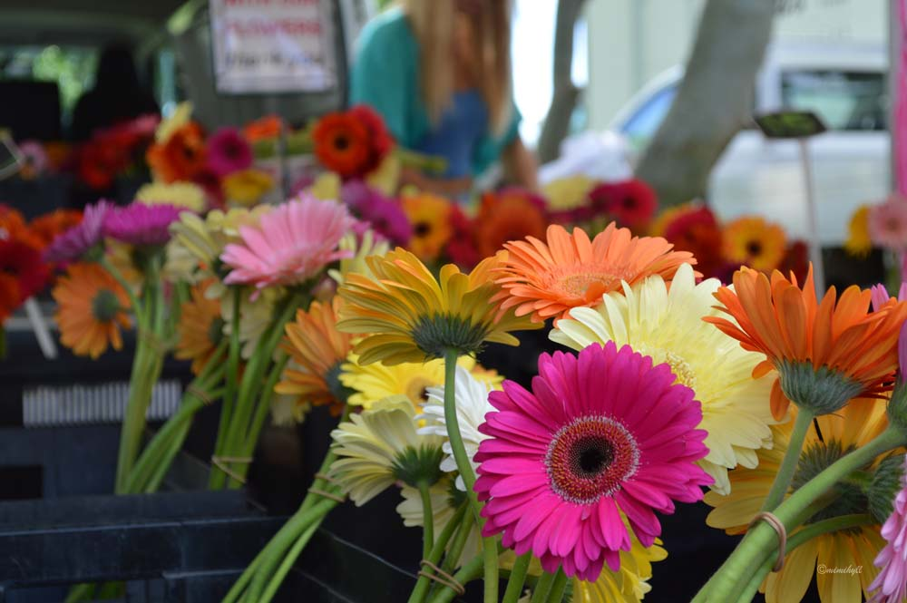 jan-powers-farmers-markets-flowers
