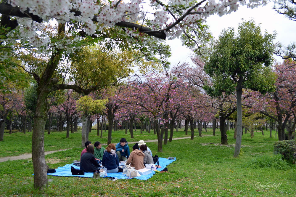 5 tips to see the best Cherry Blossoms in Osaka