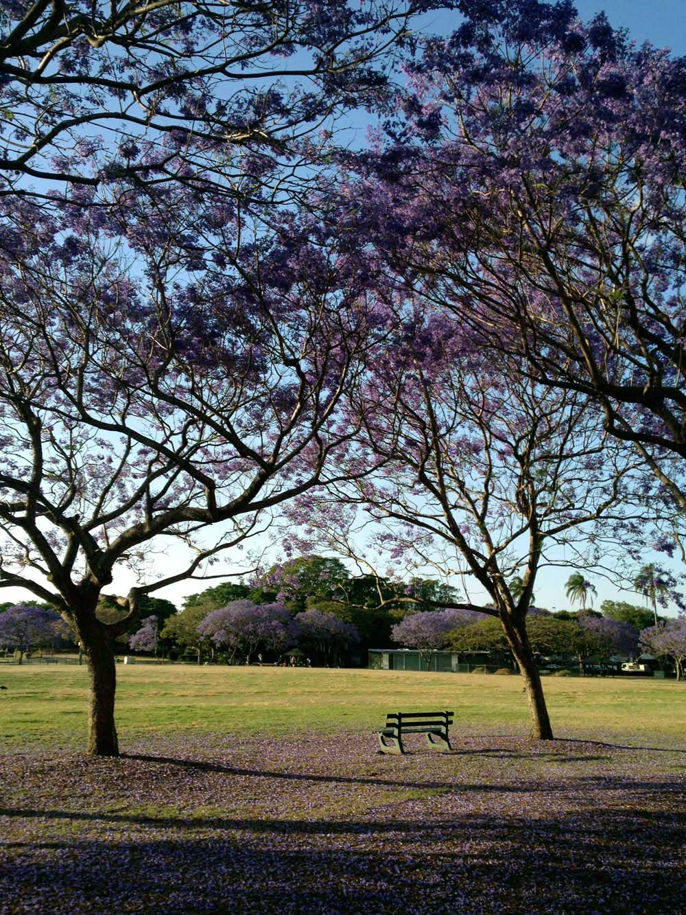 Sunshine in New Farm Park, Brisbane